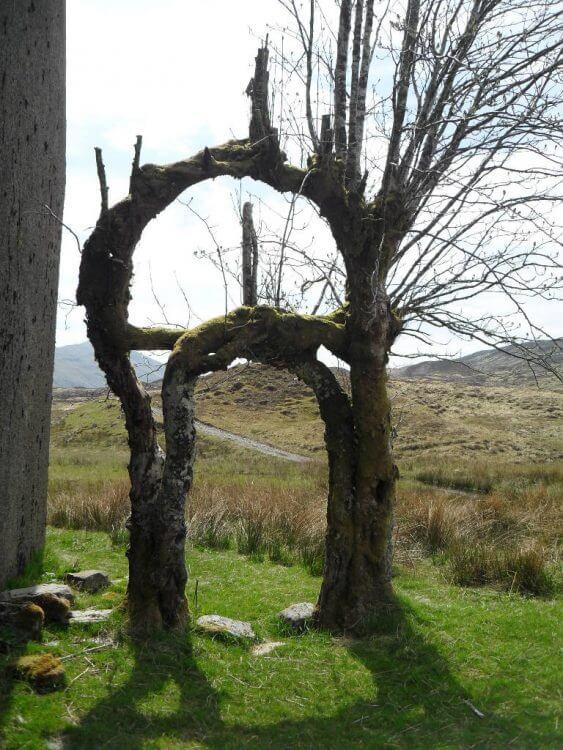 Dieser Portal-Baum bei Luibelt bringt sogar einen Biogeographen ins Staunen. Wo der wohl hinführt?