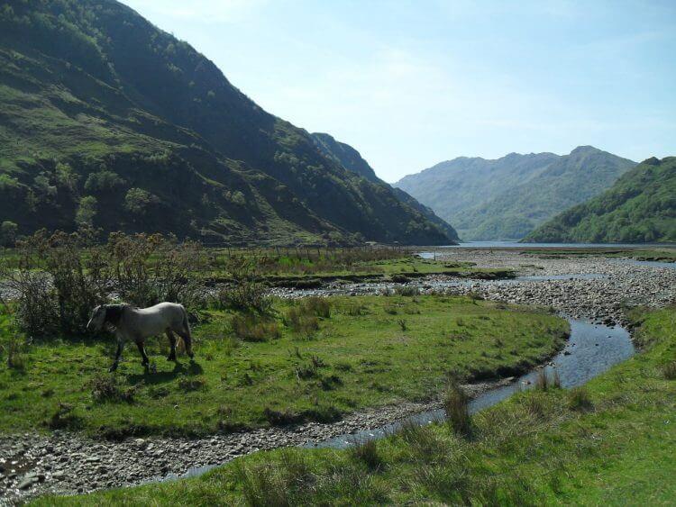 Das Firth-Pferd von Kinloch Hourn. <br/>Am Hang links geht es nach Barrisdale