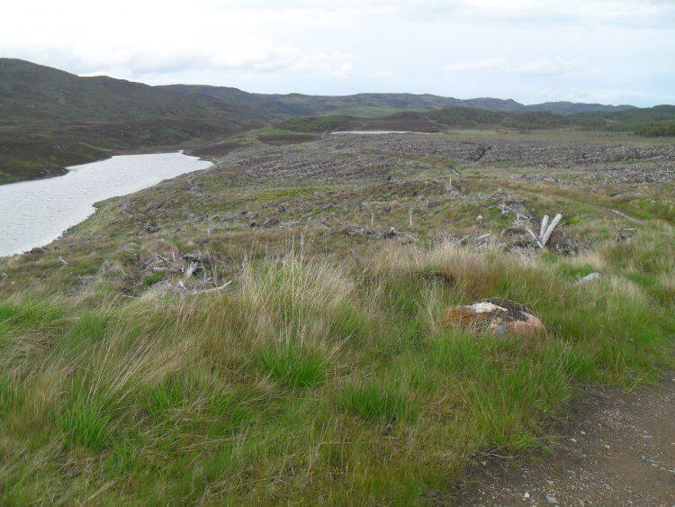 Es beginnt allerdings erst mal trocken, 2km und 150hm nach oben auf Forstweg durch einen Wald und dann durch ein typisches Kahlschlaggebiet entlang <em>Lochan Fada</em>