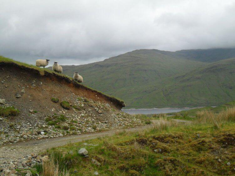 Vom Seitental zurück ans Loch Lyon. Hab ich schon erwähnt, dass es hier ne Menge Schafe gibt?