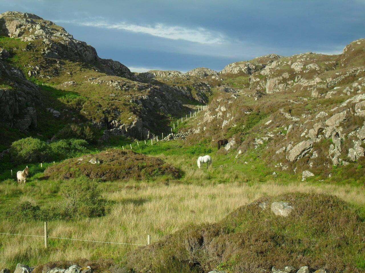 Kurz vor dem Ende der heutigen Etappe gibt es dann noch mal 2km Singletrail quer durch die Hügel und zur Abwechslung mal Pferde statt Schafe